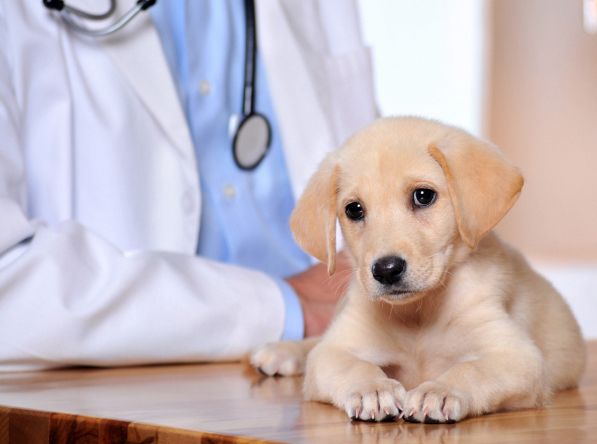 New York, NY.  Pet Clinic Insurance